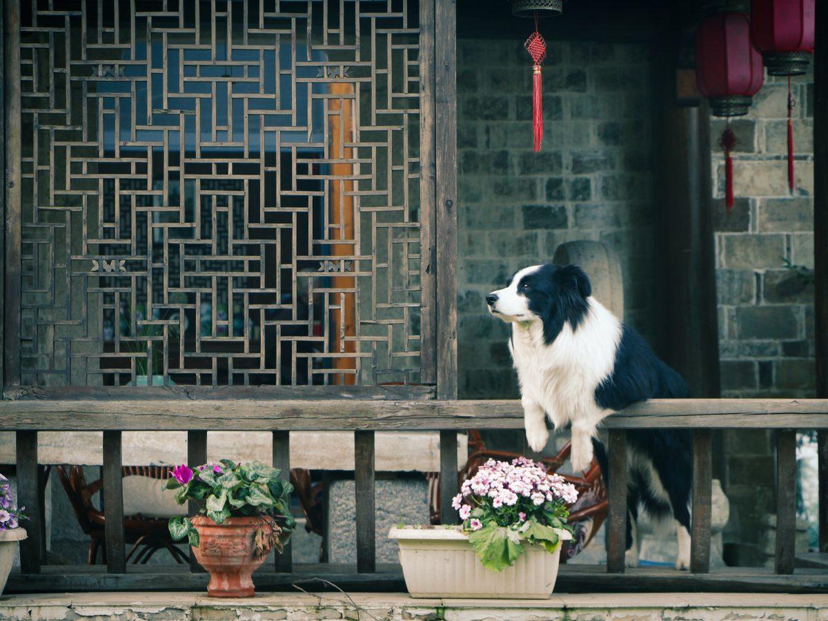 canine-daylight-dog-533079