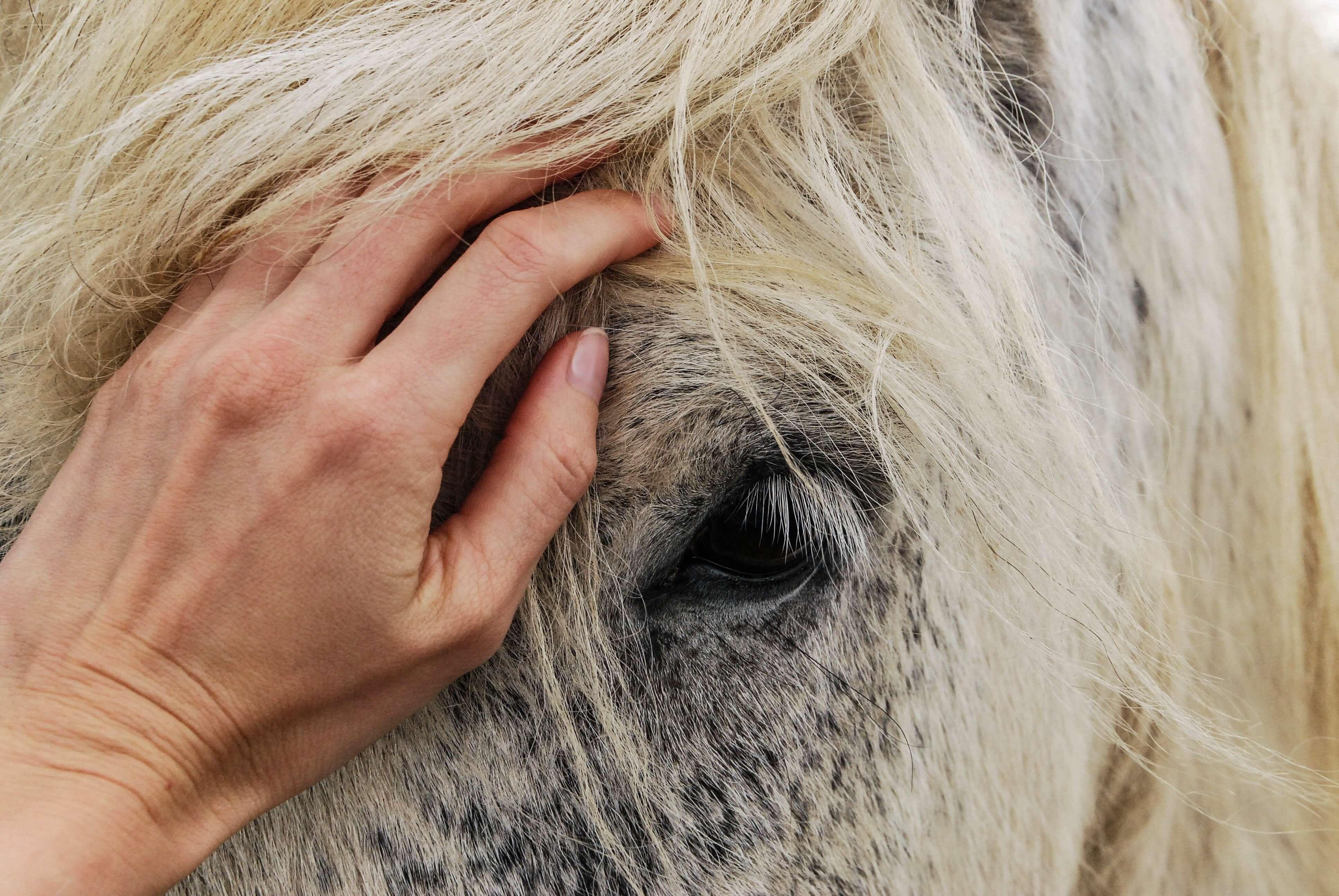 adorable-affection-animal-614521