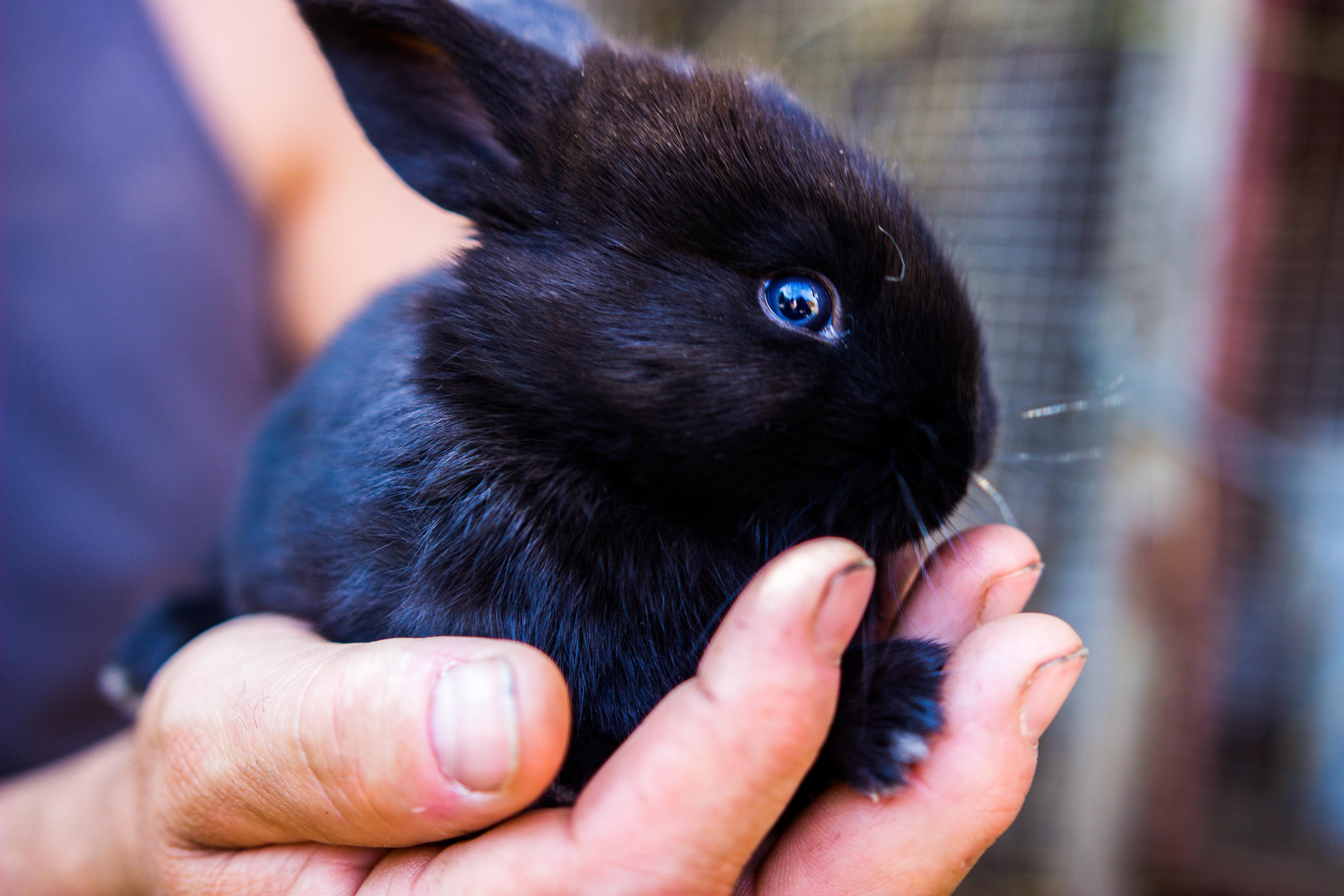 adorable-animal-black-2389073