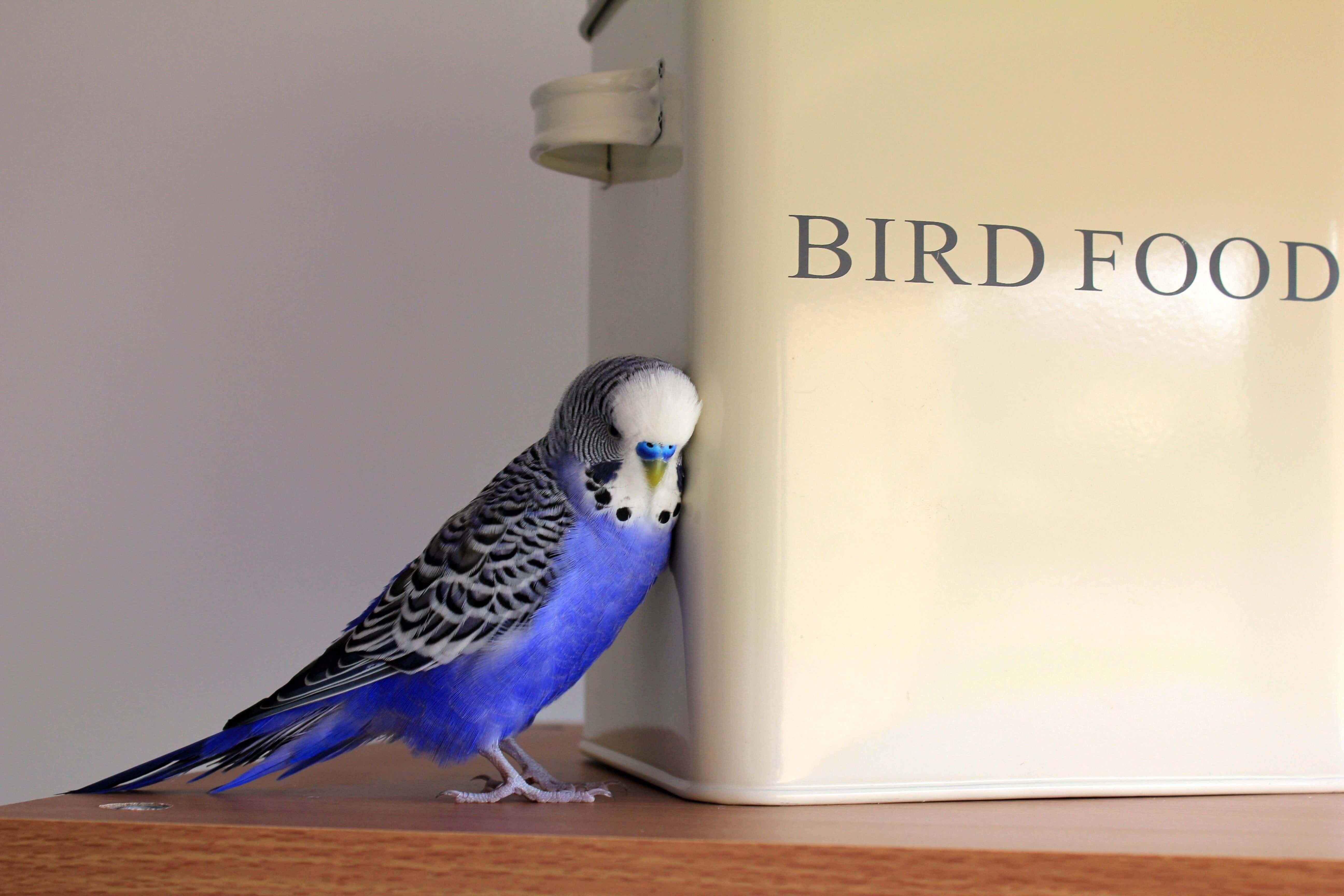 animal-avian-bird-416189